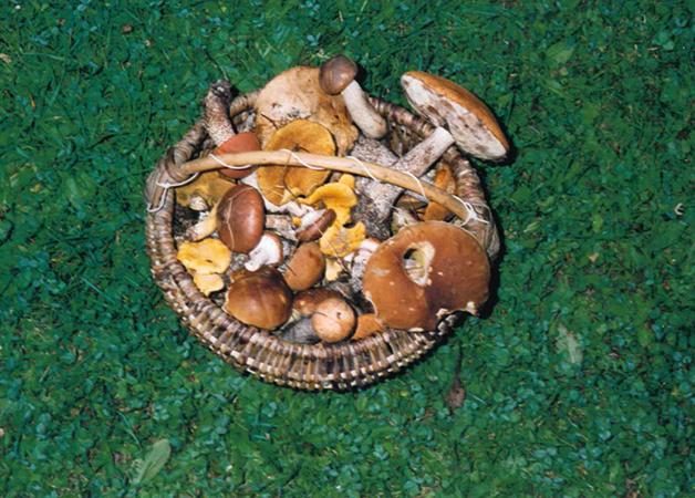 Memories of Mushrooms